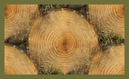 Anelli dell'albero