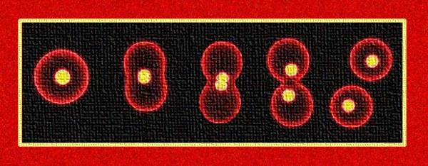 Divisione cellulare ESCAPE='HTML'