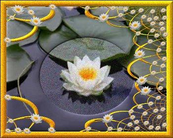 fiore di loto  ESCAPE='HTML'