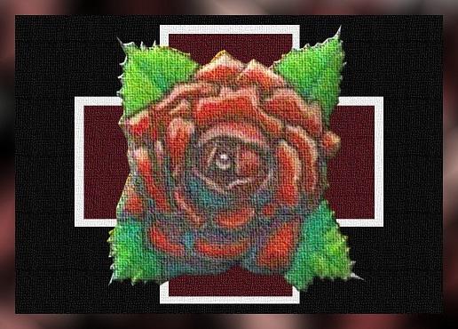 Rosa al centro della croce